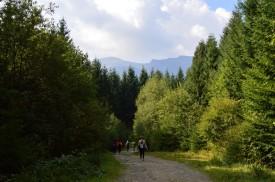 16 Die Karpatenwanderung im Umland von Jasinja. © O.Hegedues